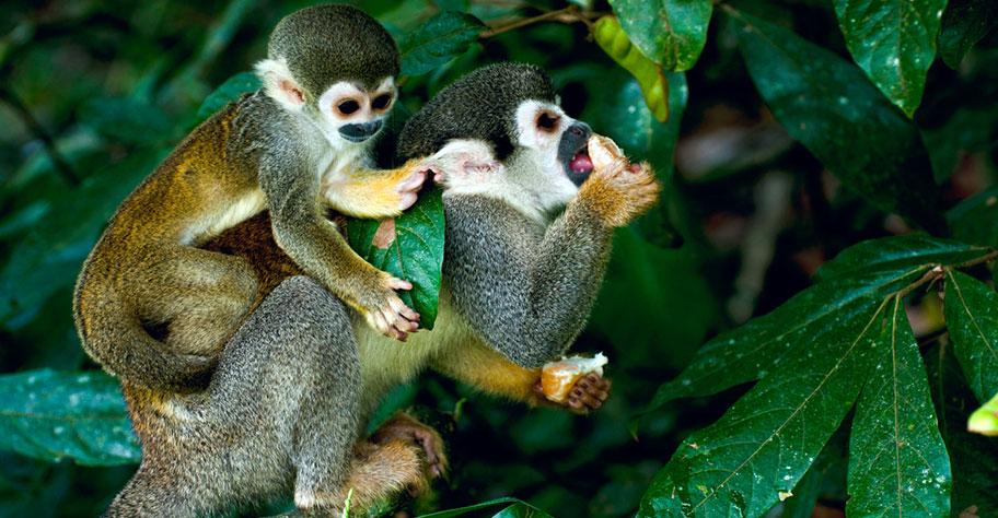 Amazonas Reisen Peru Ecuador Brasilien