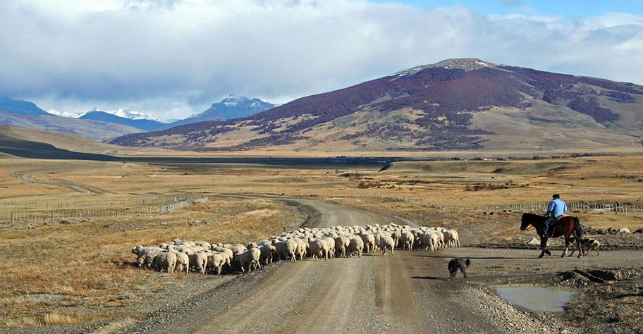 Pampa Ferien Argentinien Pferde buchen