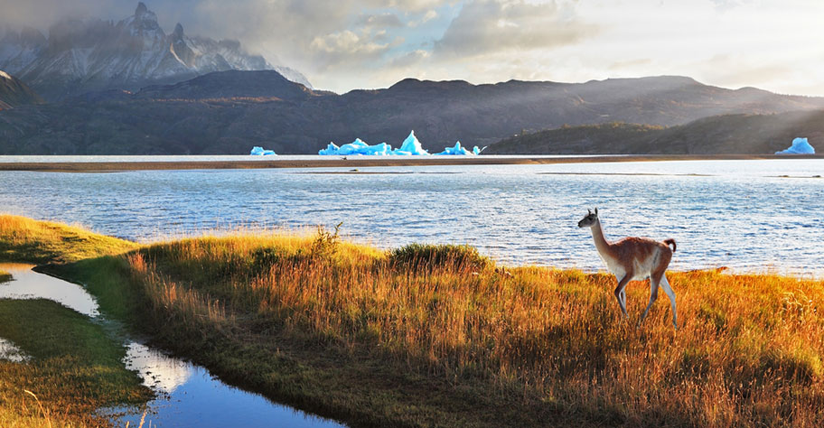 Chile kleines Kamel Reise buchen günstig