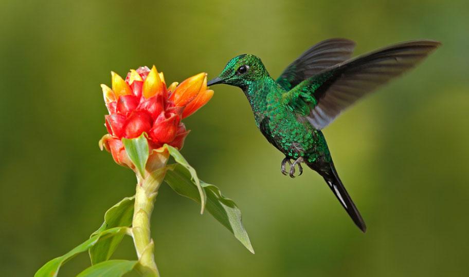 Ecuador Kolibri Reisen Urwald Trekkings Schweizer Reisebüro
