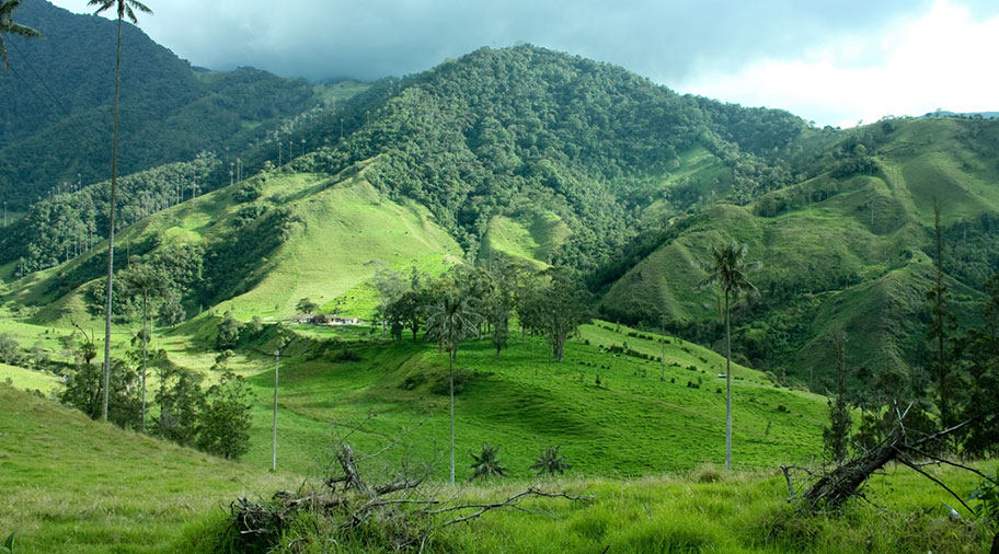 Kaffeplantagen Rundreisen Kolumbien günstige Angebote