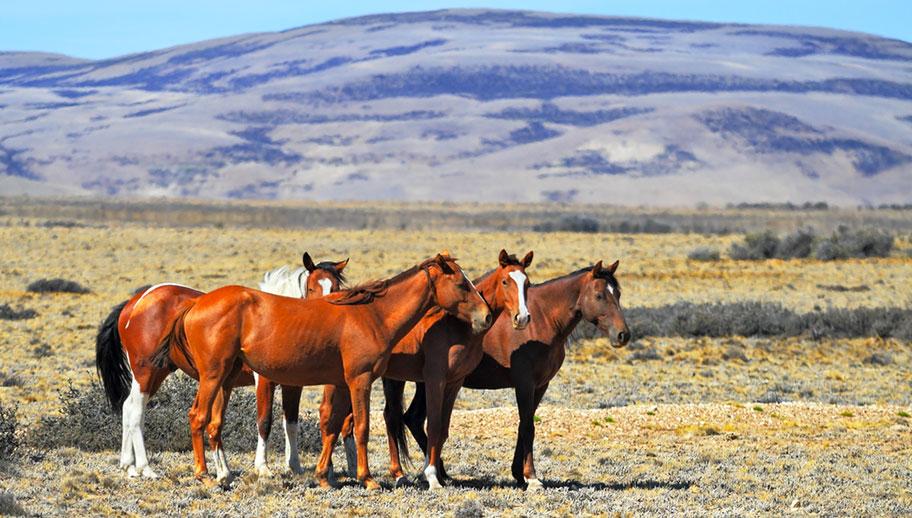Reitferien Argentinen Pampa Pferde Urlaub