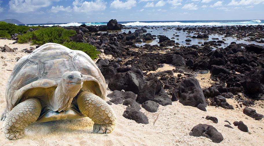 Galapagos Ferien Ecuador Reisebüro Schweiz