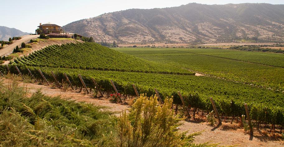 Weingut Chile Reisen Ferien Weinanbaugebiete