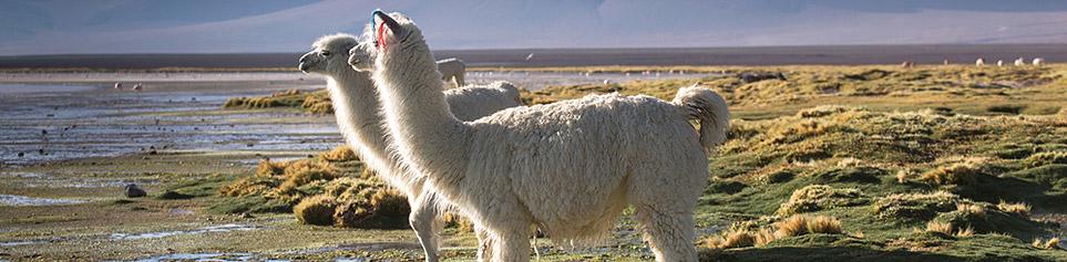 Andenkultur Bolivien