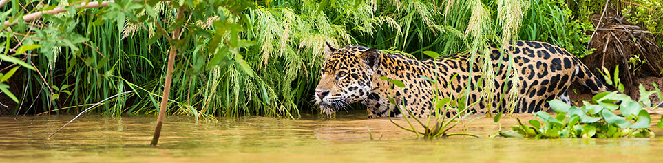 Guyanas Tierwelt