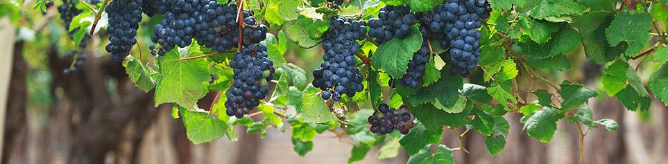 Argentinien Weinregionen