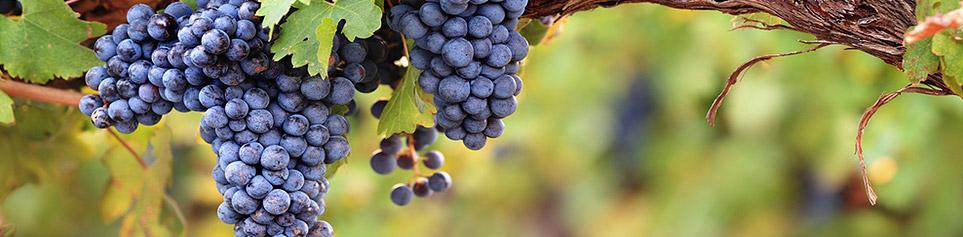 Chile Weinregionen