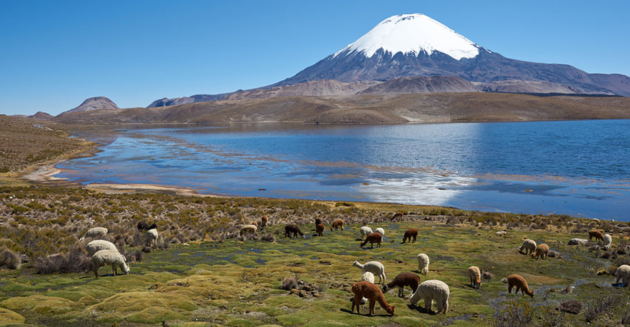 Parinacota Vulkan Chile Reiseangebote